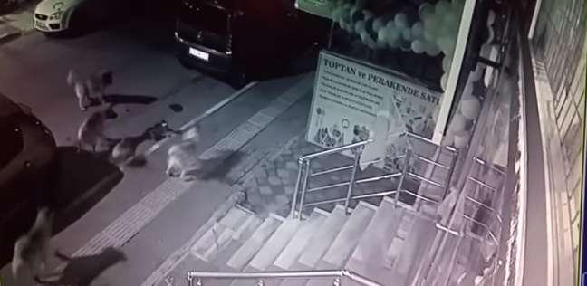هجوم 6 كلاب على قطة