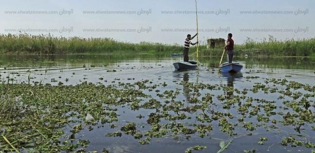 الدولة تخوض «حرب تطهير» بحيرات مصر