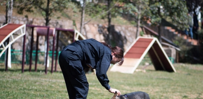 إنقاذ أكثر من 500 كلب