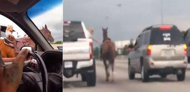 بالفيديو| على طريقة الكاوبوي.. امرأة توقف حصانا هاربا على طريق سريع