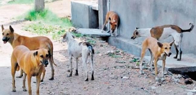"""""""الزراعة"""": تحصين 1704 كلاب ضد الأمراض الوبائية منذ بداية العام"""