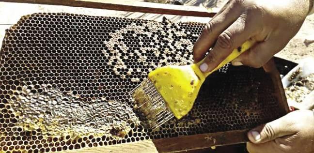 ضبط سيارة محملة بـ1500 كيلو جرام عسل مجهول المصدر في الفيوم