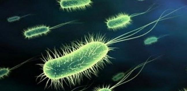 بكتيريا الأمعاء