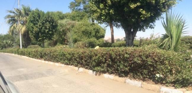 حي غرب الإسكندرية يواصل أعمال تقليم الأشجار بالحدائق