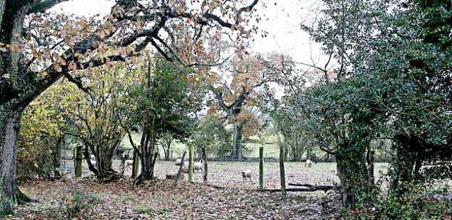 مرعى للماشية قرب غابة بمقاطعة هامبشاير الإنجليزية