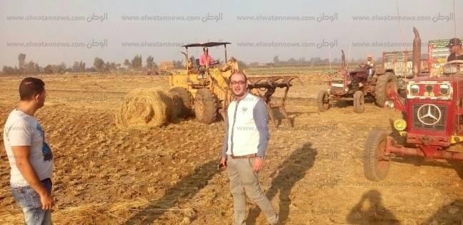 بدء حصاد المحاصيل الصيفية وزراعة 190 ألف فدان أرز بكفر الشيخ