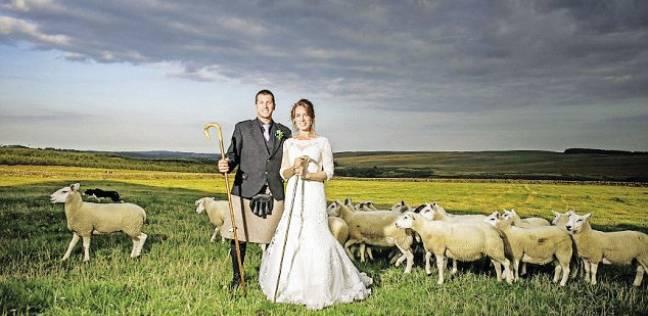 بريطانية تقيم حفل زفافها فى مزرعة: العروسة للعريس.. والجرى للمعيز
