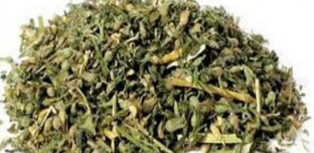 خبراء يكشفون ألاعيب تجار الكيف: خلط الأعشاب بالدواء يصعب نزولها جدول