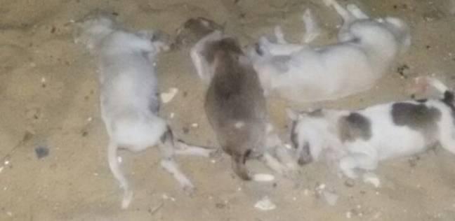 إعدام 23 كلبا ضالا في حملة بأحياء مدينة الفيوم