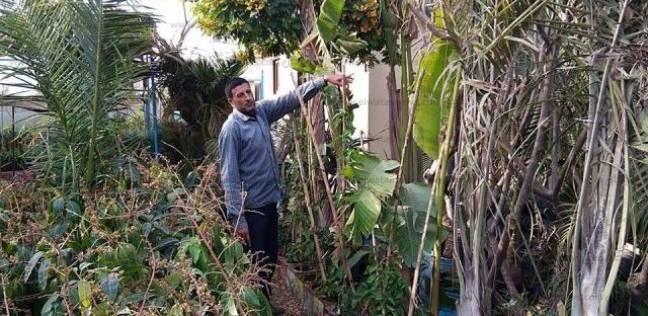 زراعة الورد فى «العدلية».. حالة عشق وراثية قبل التجارة