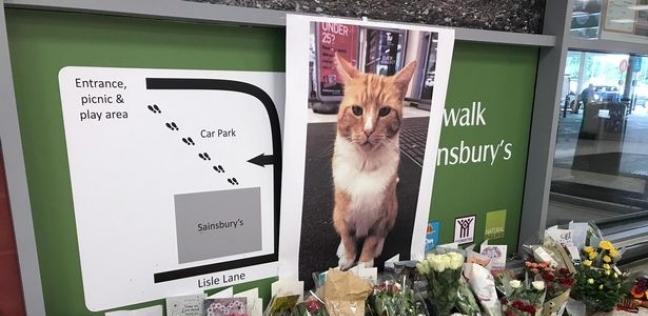 قداس لتأبين قط