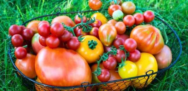 طماطم صورة أرشيفية