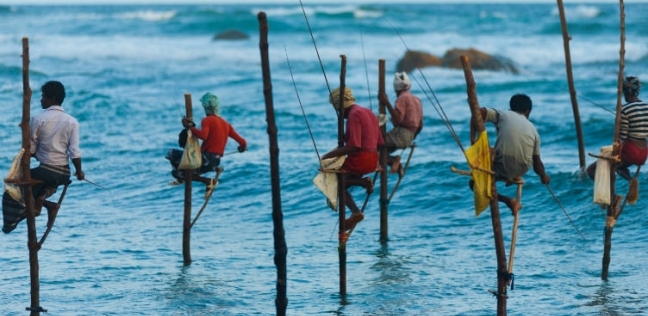 بالفيديو| أغرب طريقة لصيد السمك في سريلانكا