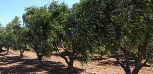 حملة مكبرة لزراعة 200 ألف شجرة مثمرة فى الإسكندرية ومحافظات الدلتا