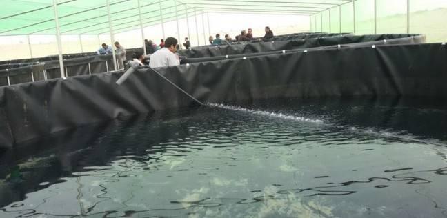 إنشاء استزراع سمكي بطريقة الأكوابونيكس على مساحة 1500 متر بشرم الشيخ
