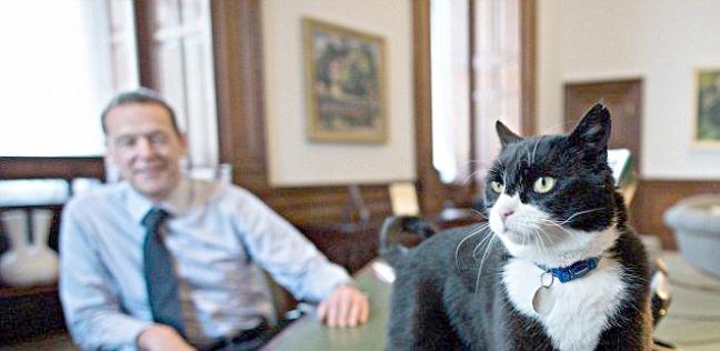 """القط """"بالمرستون"""""""