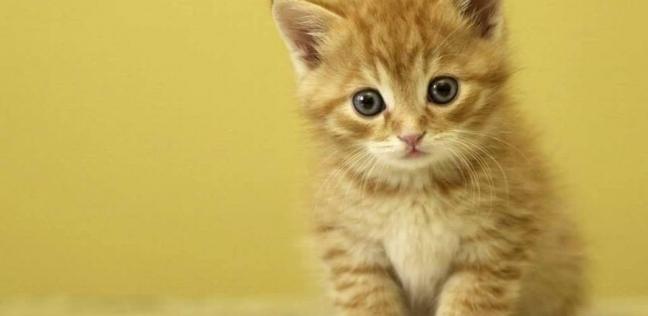 """قطة تعثر على """"كيس مخدرات"""".. والشرطة: """"انسوا الكلاب البوليسية"""""""