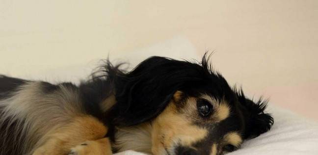 حكم قضائى بإجازة مدفوعة الأجر لرعاية كلب