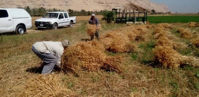 محافظ الغربية يكلف السكرتير العام بتشكيل لجنة لمتابعة بدء توريد القمح