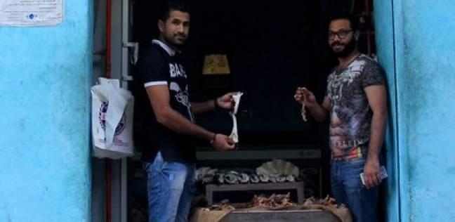 «السرومباء» تسلية السوايسة الشعبية.. تأتى من سفاجا والغردقة وأسعارها تبدأ بـ15 جنيهاً