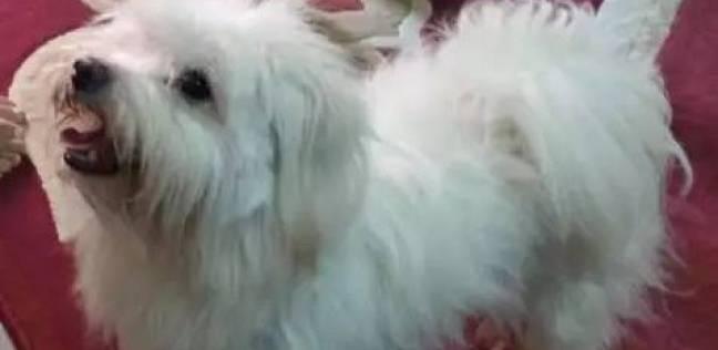 """تجديد حبس عامل بتهمة قتل صديقه بسبب الخلاف على بيع """"كلب"""""""