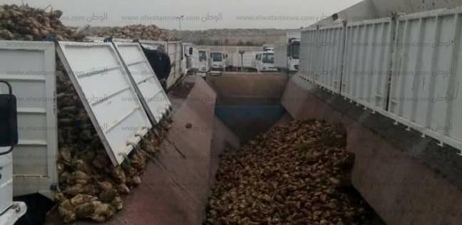 مديرية الزراعة: حصاد أكثر من 65 ألف فدان بنجر في كفر الشيخ