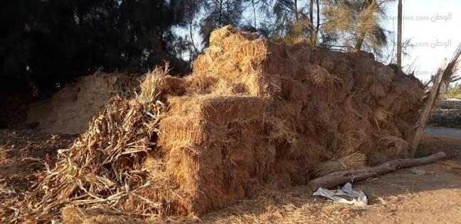 """""""شؤون البيئة"""": 191 محضر حرق """"قش الأرز"""" في كفر الشيخ"""
