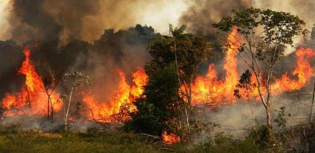 غابات الأمازون تحترق..كيف يكافح السكان الأصليون من أجل البقاء؟