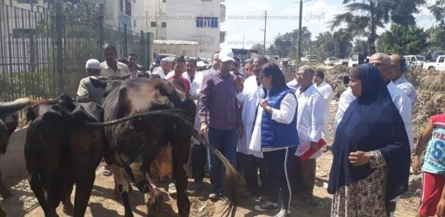 نائب وزير الزراعة تتفقد حملة التحصين ضد الحمى القلاعية بالبحيرة