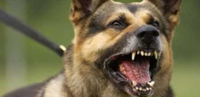 تسبب كلب في إفقاد رجل رجولته