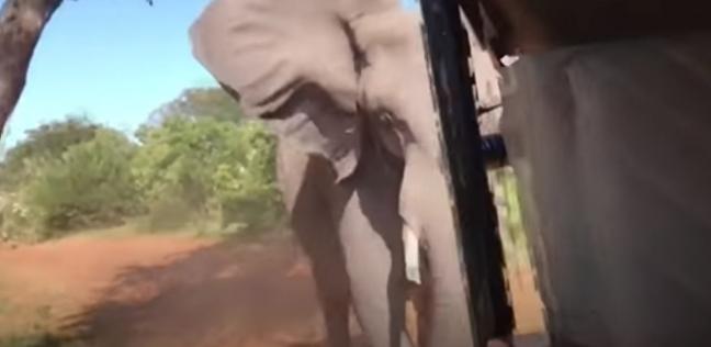 شهد مرعب.. قطيع من الفيلة يهاجم سارة سياح