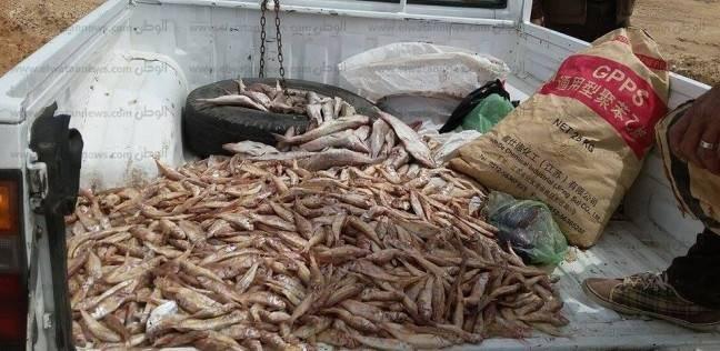 ضبط 1561 كيلو أسماك فاسدة بمطعم في الغردقة