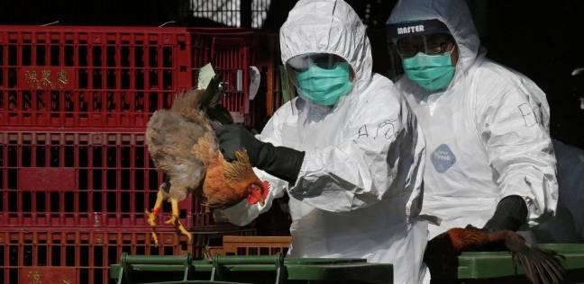 """""""بيطري الشرقية"""": تحصين 47 ألف طائر ضد إنفلونزا الطيور خلال شهر أغسطس"""
