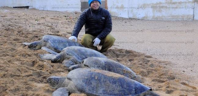 البيئة: حملة على مدار أسبوع لمواجهة بيع السلاحف البحرية بالأسواق في الإسكندرية
