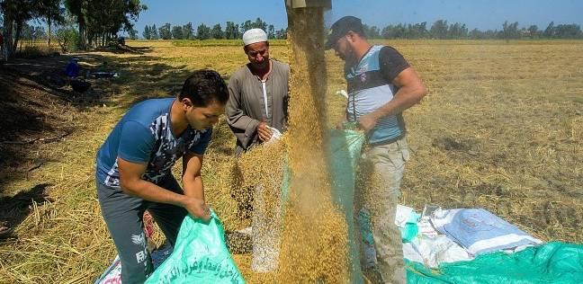 مستشار وزير التموين: تحديد سعر الأرز سيترك وفقا لحالة الموسم المقبل