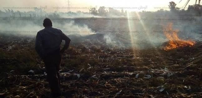 """""""البيئة"""": لم نحرر أي محضر حرق قش أرز بالدقهلية بعد حصاد 16%"""