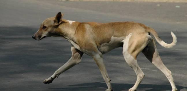 بالصور  كلب يقتل طفلة في حدائق القبة