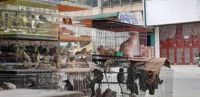 حيوانات برية في أسواق أسيا