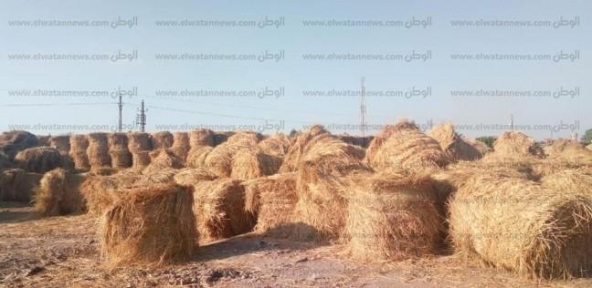 """""""زراعة كفر الشيخ"""": تدوير وكبس وفرم أكثر من 195 ألف طن """"قش أرز"""""""