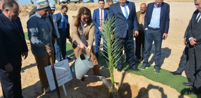 """وزيرة التضامن تزرع """"شجرة"""" على طريق مطار الخارجة بالوادي الجديد"""