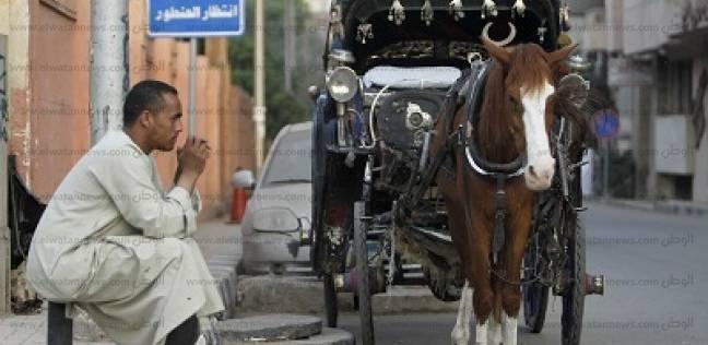 الحنطور الحديث: تطبيق على الإنترنت و«حفاضات» للخيول