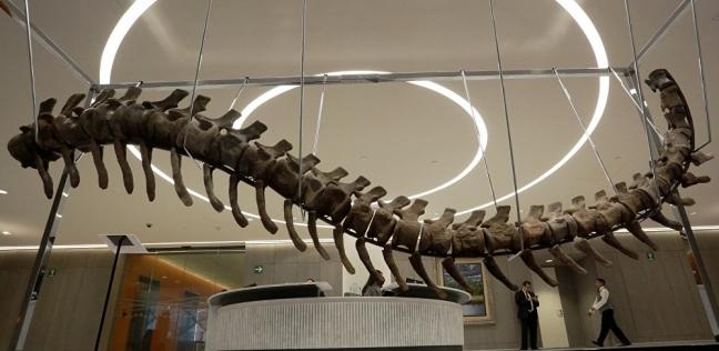 باحثون يعثرون على بقايا ديناصور غير معروف