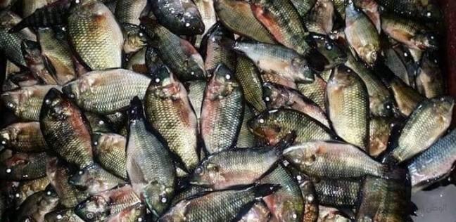 أسعار السمك اليوم الخميس 16- 5 - 2019 في مصر