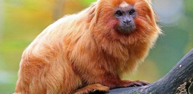 صور.. 10 حيوانات مذهلة في غابات الأمازون.. بعضها مهدد بالانقراض