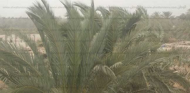 وزارة البيئة تحذر: رياح مثيرة للأتربة على القاهرة والوجه البحري