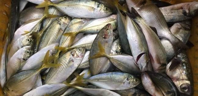 """""""الغرفة التجارية"""": تراجع أسعار الأسماك من 30% لـ 40% أول سبتمبر"""