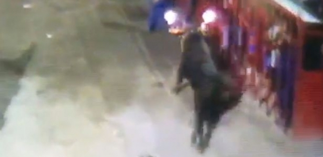 بالصور| ثور هائج يحرق عجوزا بحلبة مصارعة
