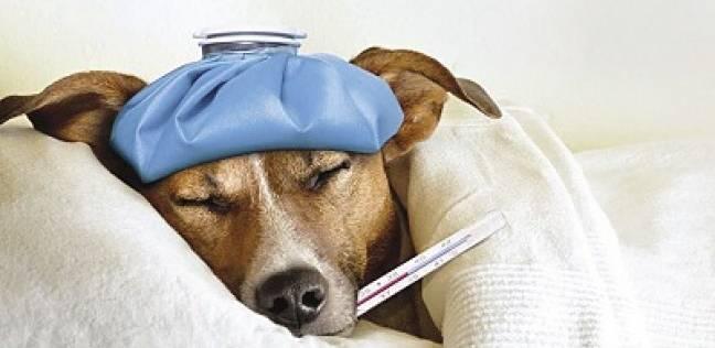 الحيوانات أيضاً تلاحقها الأمراض المزمنة: فشل كلوى و«لوكيميا» وجلطات