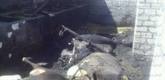 """""""الحماية المدنية"""" تسيطر على حريق شب بحظيرة مواشي في الدقهلية"""