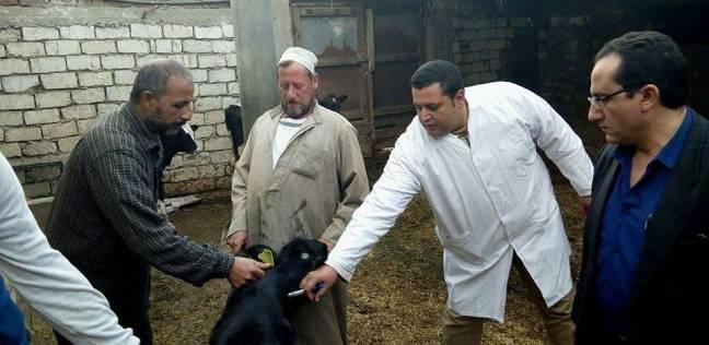 تحصين الماشية ضد الحمى القلاعية والوادي المتصدع بالدقهلية